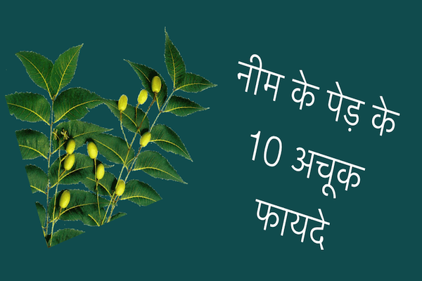 10 Best Uses of Neem Tree in Hindi - नीम पेड़ के अचूक फायदे ! 3