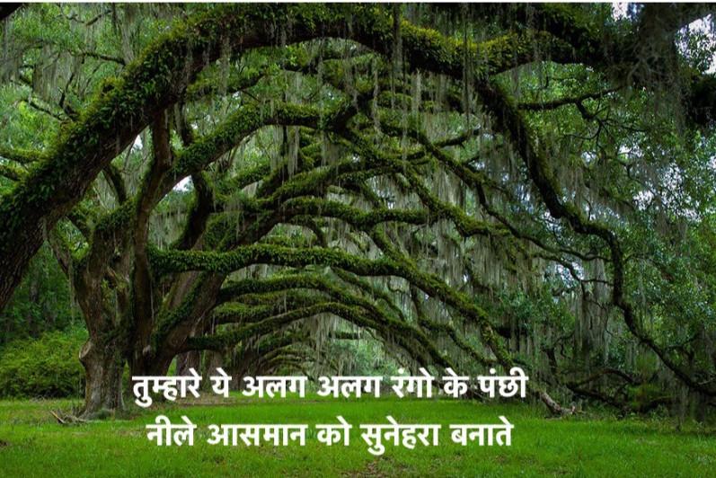 Poem on Nature in Hindi प्रकृति पर प्रेरणादायक कविता 1