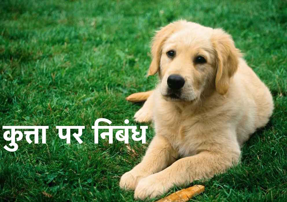 Essay on Dog in Hindi