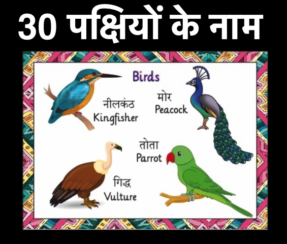 Birds Name in Hindi and English with Pictures