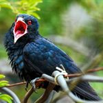 Birds Name in Hindi and English with Pictures पक्षियों के नाम 3