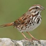 birds-name-in-hindi-and-english-with-pictures