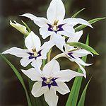 Flowers Name in Hindi फूलों के नाम हिंदी और इंग्लिश में। 20
