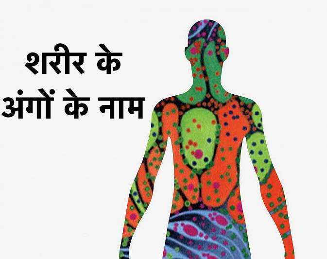 Human Body Parts Name list in Hindi