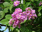 Flowers Name in Hindi फूलों के नाम हिंदी और इंग्लिश में। 15
