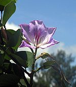 Flowers Name in Hindi फूलों के नाम हिंदी और इंग्लिश में। 4