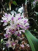 Flowers Name in Hindi फूलों के नाम हिंदी और इंग्लिश में। 5