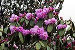 Flowers Name in Hindi फूलों के नाम हिंदी और इंग्लिश में। 9