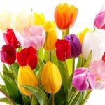 Flowers Name in Hindi फूलों के नाम हिंदी और इंग्लिश में। 34