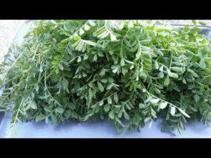 Vegetables Name in Hindi and English With Pictures सब्जियों के नाम इंग्लिश और हिंदी में 84