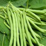 Vegetables Names with Pictures in Hindi सब्जियों के नाम उनकी फोटो के साथ 43