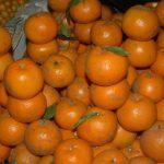 Fruits Name in Hindi & English सारे फलों के नाम 10