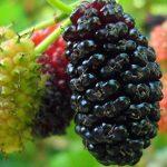 Fruits Name in Hindi & English सारे फलों के नाम 29