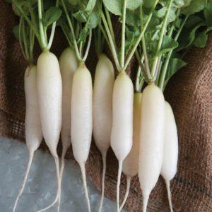 Vegetables Name in Hindi and English With Pictures सब्जियों के नाम इंग्लिश और हिंदी में 65
