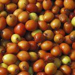 Fruits Name in Hindi & English सारे फलों के नाम 24